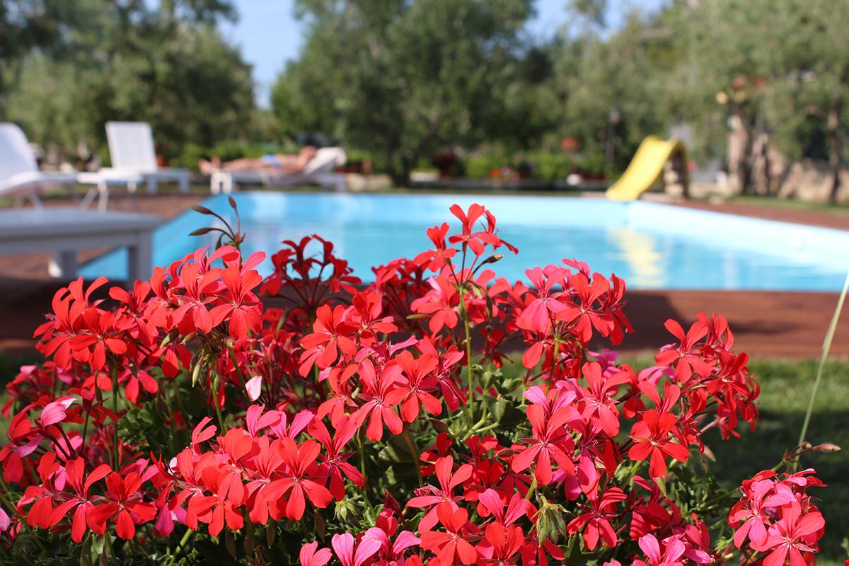 i sapori del gargano - vieste - piscina 4